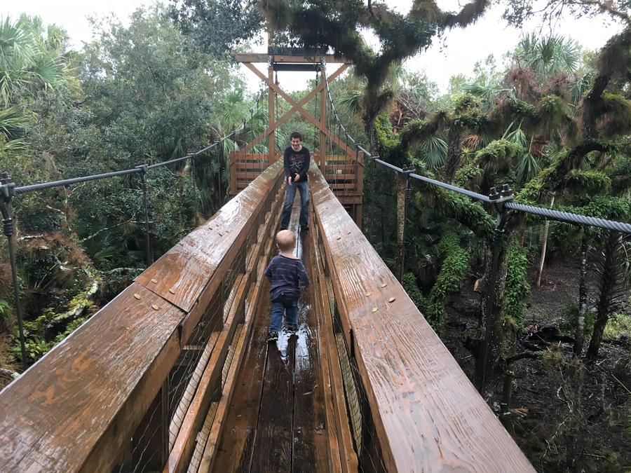 Florida State Park Canopy Bridge Forest