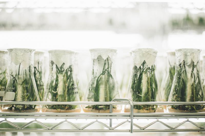 Experimental Plants In Glass Beakers