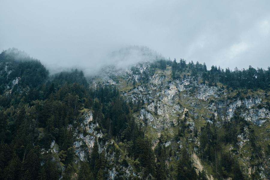 misty mountain with trees