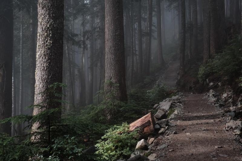 Foggy Forest Path