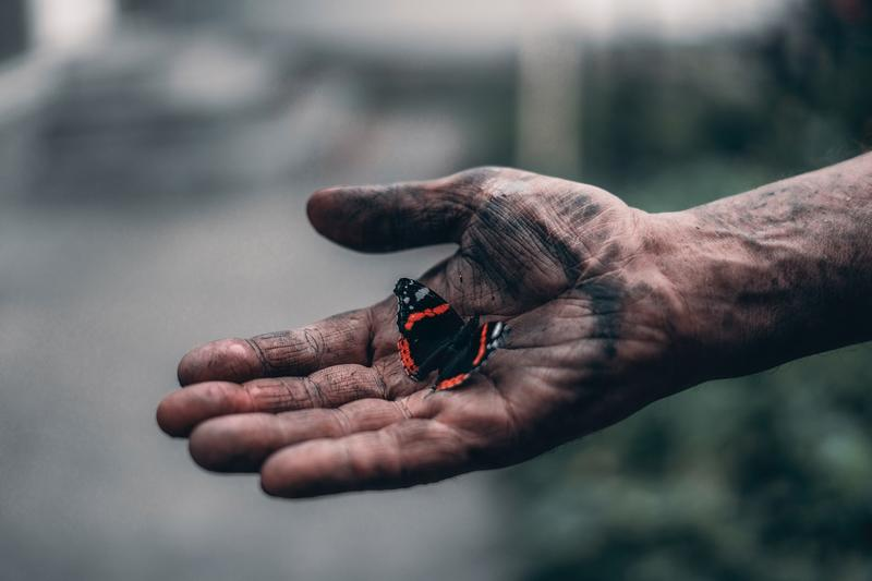 Butterfly in a dirty hand