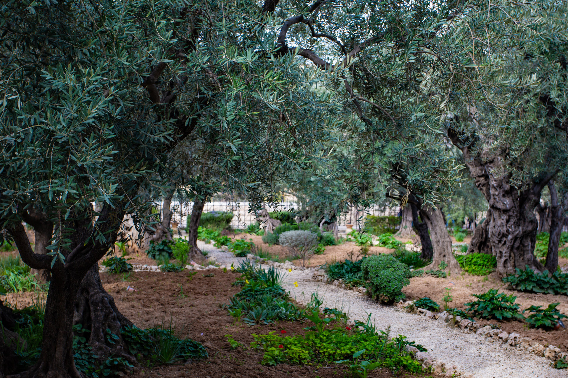 Discussing Jesus' Prayer in the Garden of Gethsemane — From The Garden To The Cross