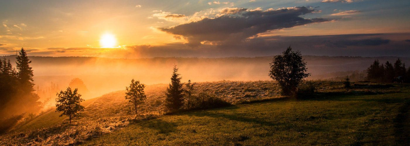 morning sunrise, outdoors, trees, grass, sky